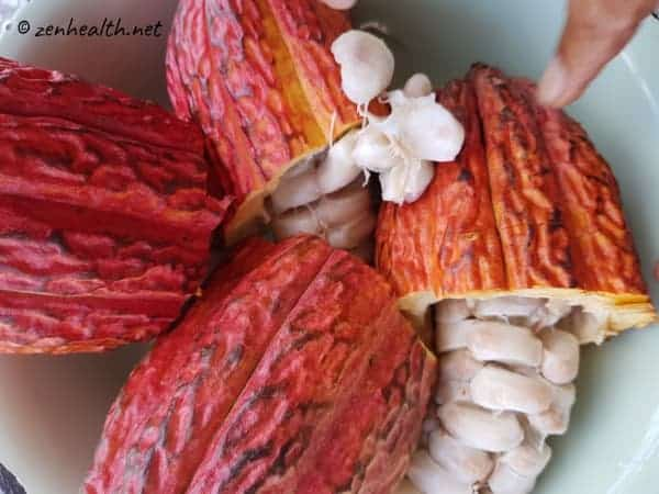 cocoa pods and seeds