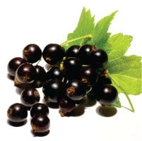 European Black Currants