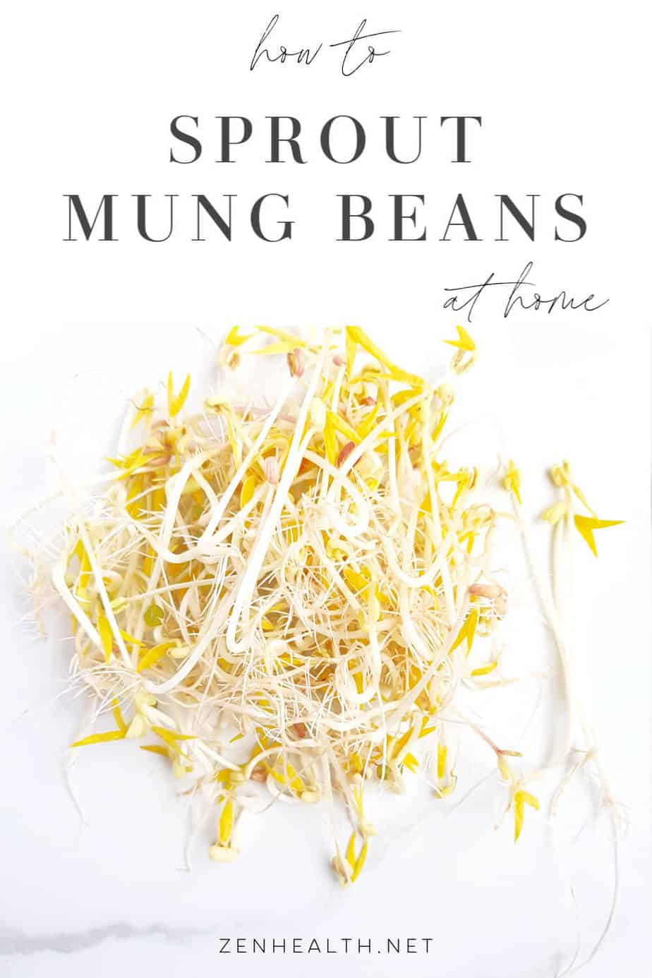 How to grow mung bean sprouts at home | How to sprout mung beans at home