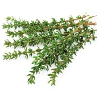 Thyme Branches
