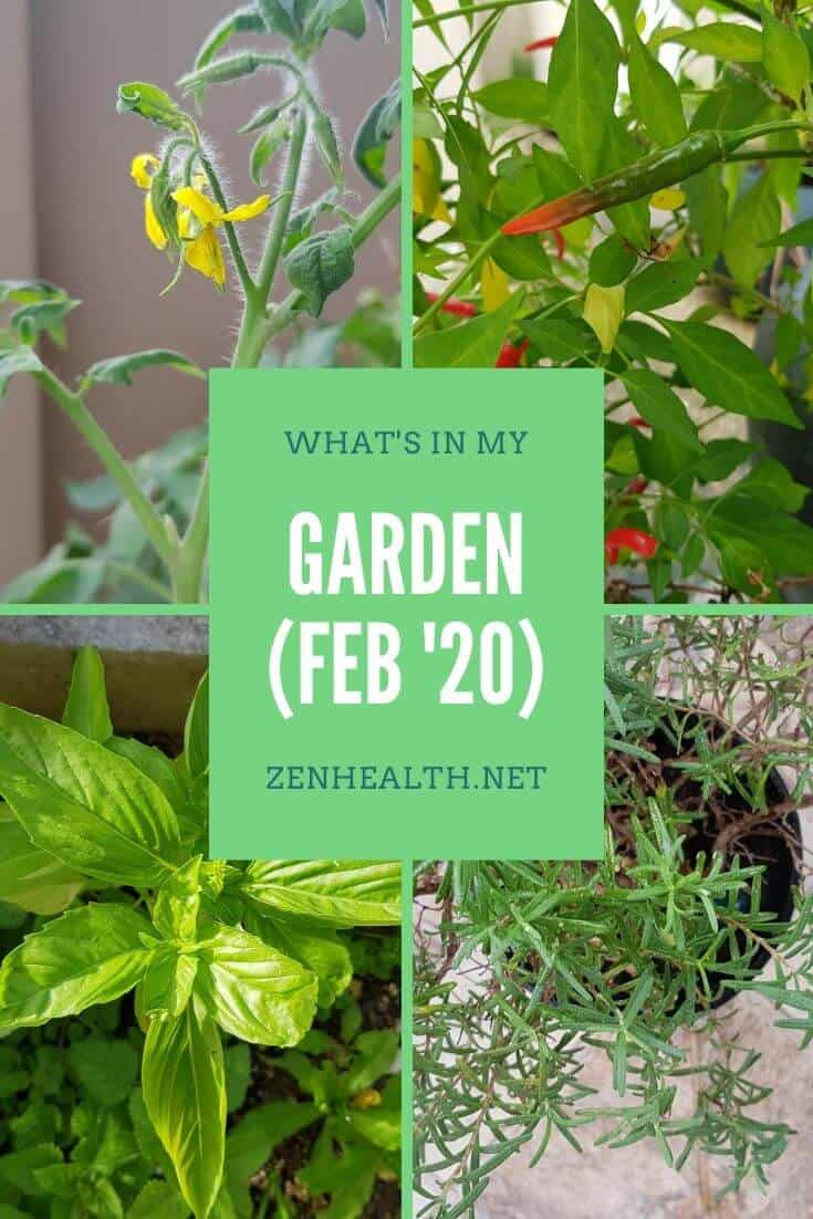 What's in my garden (February 2020)